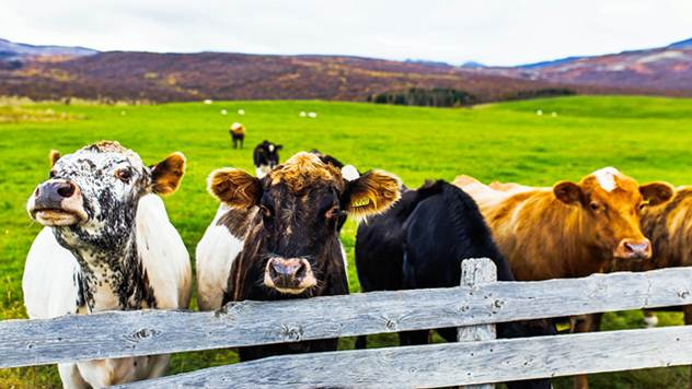Farma stoke - © Pixabay