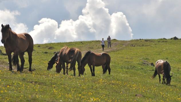 Divlji konji na Stolovima © Milanko Danilović