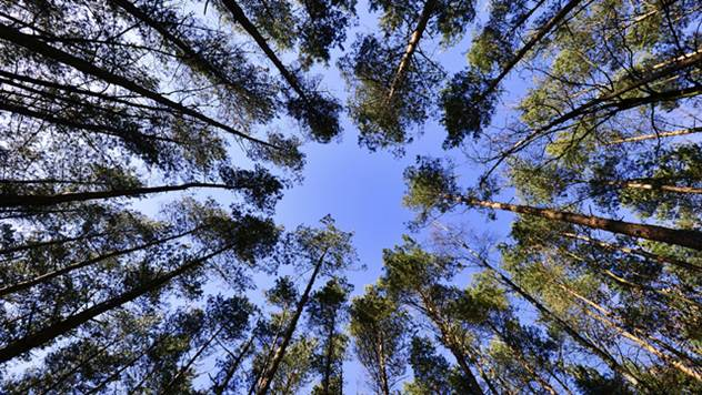 Šuma - © Pixabay