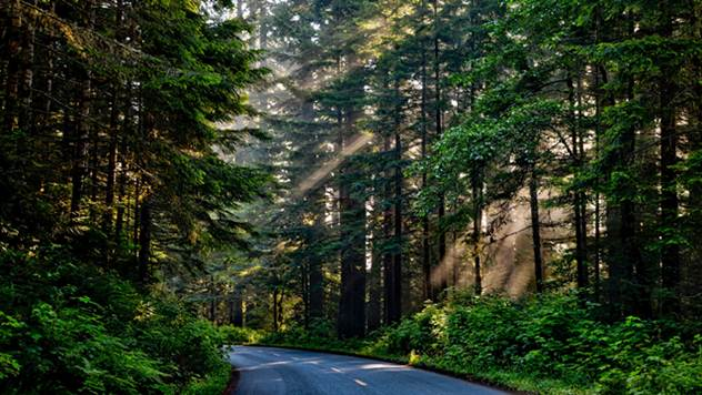 Budimo odgovorni za prvomajske praznike, sačuvajmo naše šume zajedno - © Pixabay