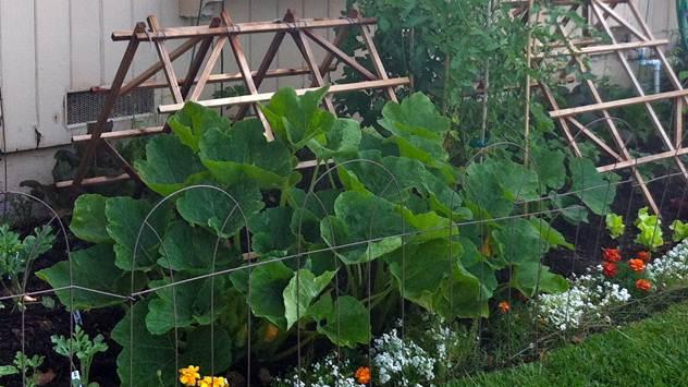 Tikve - idealna dekoracija za vašu letnju baštu  - © Hope Gardens