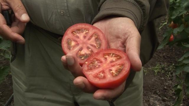 Ovako nastaju nazivi sorti i hibrida povrća