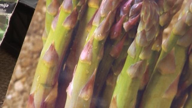 VIDEO VODIČ: Sve što bi trebalo da znate o gajenju špargle