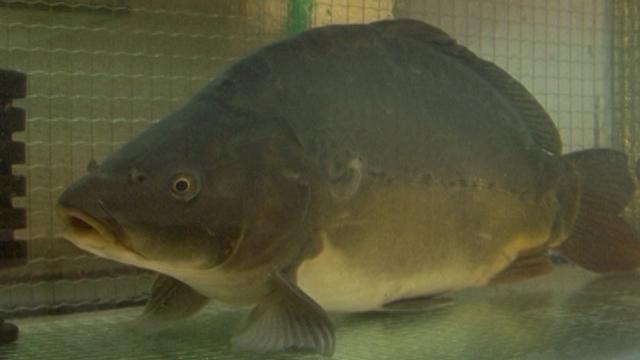 Istraživali smo: kakvo je stanje ribarstva u našoj zemlji?