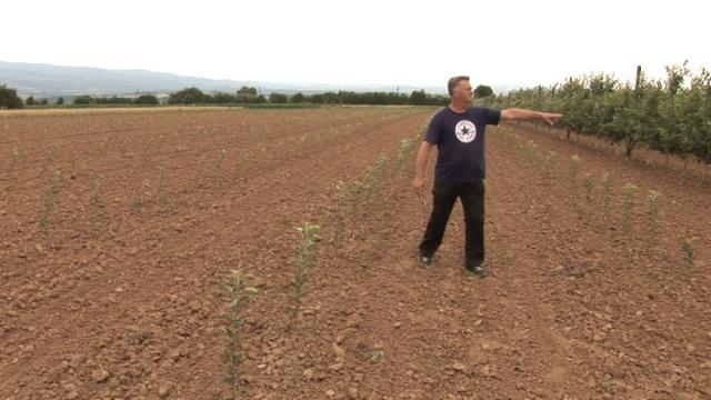 Voćar iz Leskovca: Jabuke gaji iz meraka, a ne zbog zarade