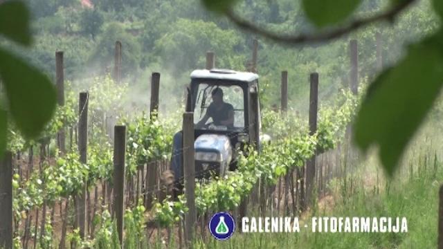 Galenika-Fitofarmacija u prestonici dobrih vinograda i vrhunskih vina