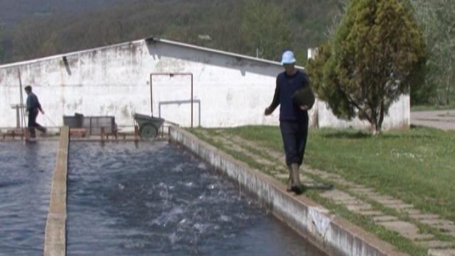 U Srbiji se najviše jedu morske ribe i šaran