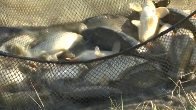 Riba - poželjna namirnica životinjskog porekla na trpezi savremenog čoveka