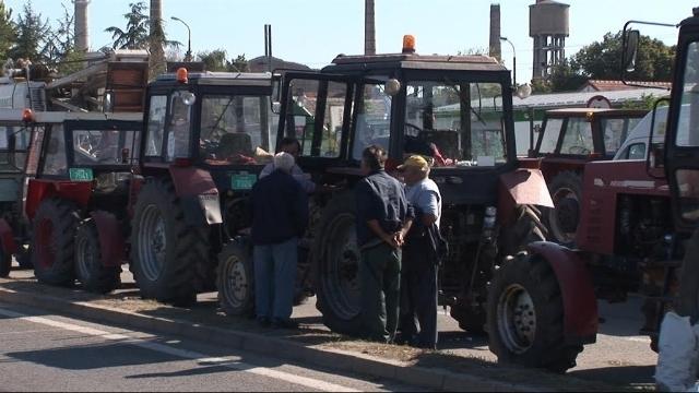 Vest - Blokada puteva zbog niske otkupne cene suncokreta