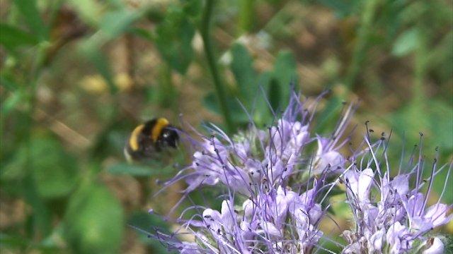 Kako privući oprašivače i druge korisne insekte