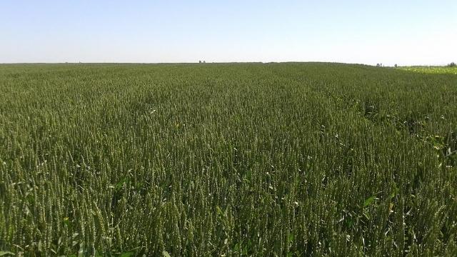 Da li znate zašto je Nikol prvi izbor iskusnih poljoprivrednika?