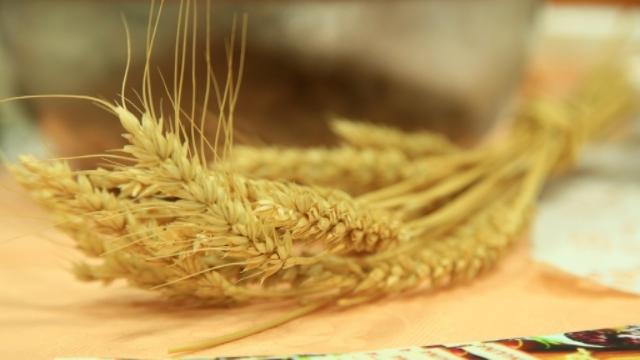 Setva pšenice u Srbiji