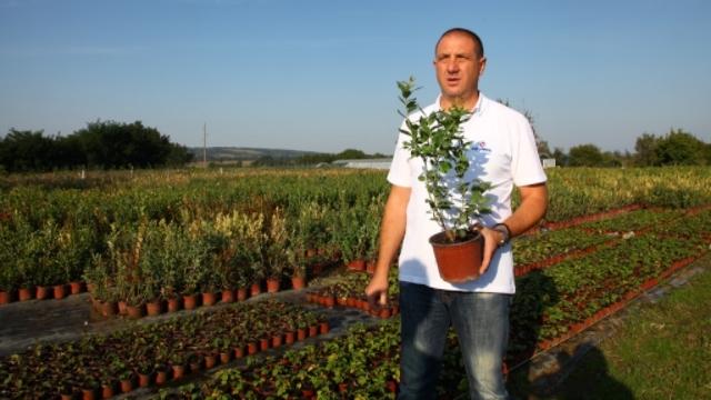 Naručite sadnice borovnice na vreme!