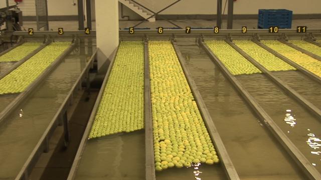 U voćnjaku Delta Agrara u Čelarevu pažljivo se bira svaki plod jabuke!