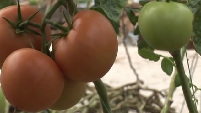 Zašto čak i visoko kvalitetni poljoprivredni proizvodi imaju problem sa plasmanom na tržištu?