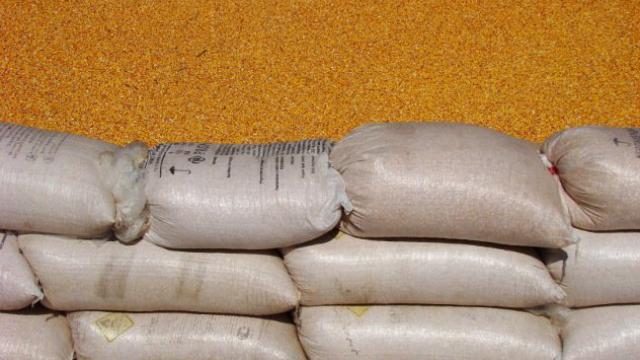 Vest - Republička direkcija za robne rezerve vrši otkup merkantilnog kukuruza