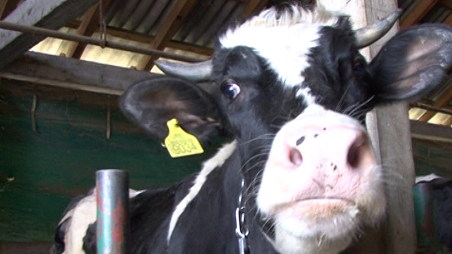 Šta stručnjaci kažu o problemima u domaćem mlekarstvu?
