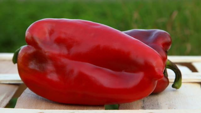 Koja je tajna uspeha Udruženja proizvođača paprike iz Ruskog Krstura?