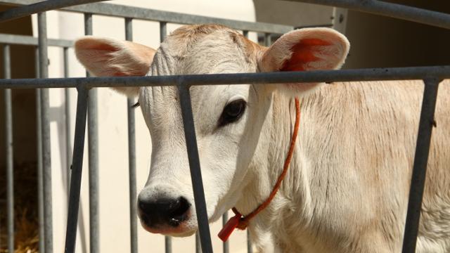 Vesti - Da li je poljoprivreda šansa Srbije?