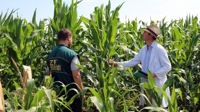 "Institut za kukuruz ""Zemun Polje"" nagrađuje poljoprivrednike - počnite novu sezonu sa proverenim partnerom!"