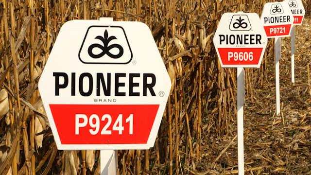 Pioneer hibrid - P9241