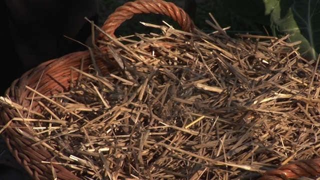 Slama, trska i agrili najbolja su zaštita za biljke od zime
