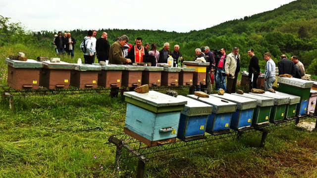 "Pčelarstvo je način života - Udruženje pčelara ""Beli bagrem"", Leskovac"