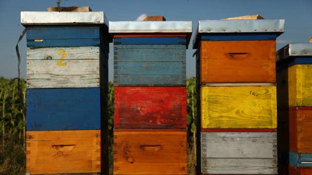 Vesti – Pomoć za mlade pčelare iz Opštine Trstenik