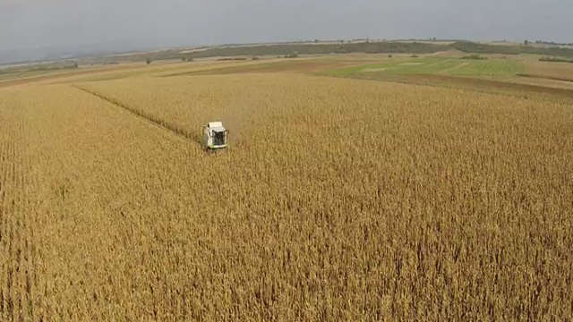 KWS hibridi kukuruza - Kerbanis