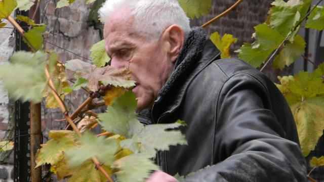 """""""Vinu je loza majka, zemlja otac, a vreme – njegova sudbina"""" - Petar Despotović, agronom u penziji"""