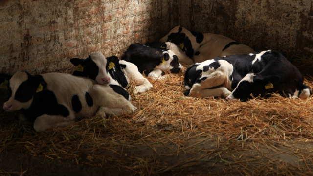 Vesti – Čačak podstiče razvoj stočarstva