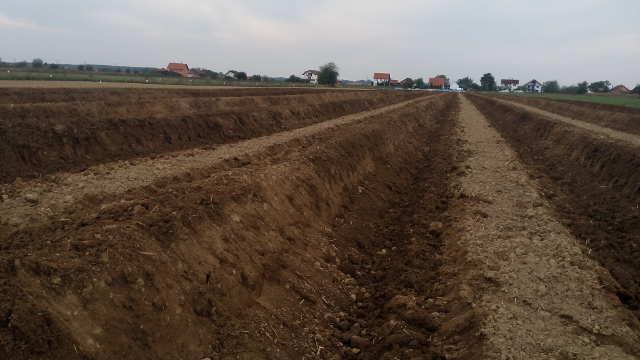 Vesti - Podsticanje poljoprivrede u Novom Sadu