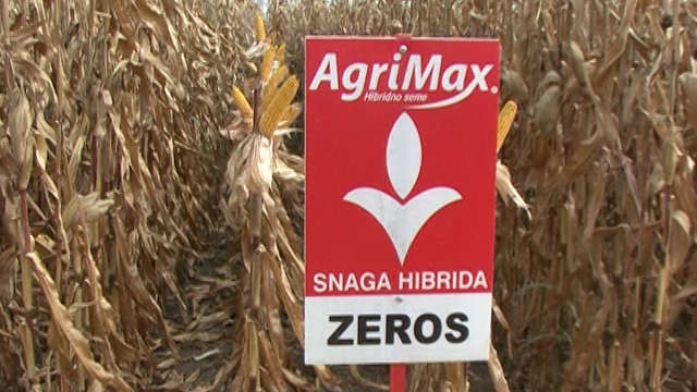 Agrimax hibridi kukuruza - Zeros