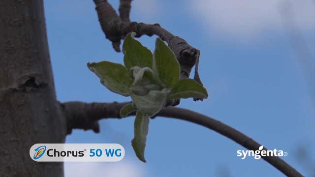 Syngenta fungicidi - Chorus 50 WG
