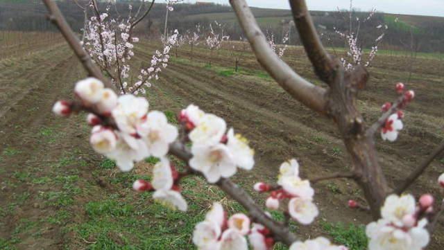 Pilot-projekat u Topoli - navodnjavanje voćnjaka