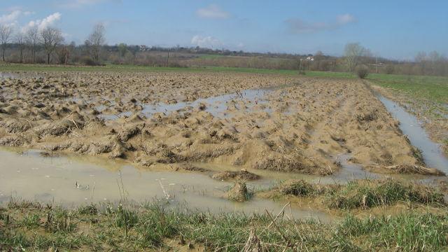 Žitarice propale zbog poplava, setva kasni mesec dana!