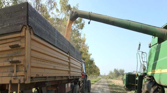 Kerbanis - hibrid kukuruza za savremene ratare