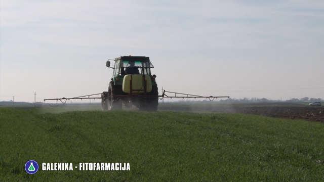Otkrivamo vam kako da pravilno zaštitite pšenicu
