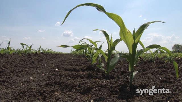 3 razloga da koristite herbicid Dual gold 960 EC®