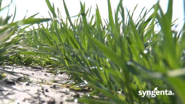 Syngenta fungicidi - Artea® 330 EC