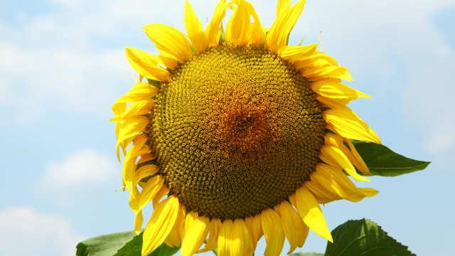 Selektivni herbicidi - Imazar® 40