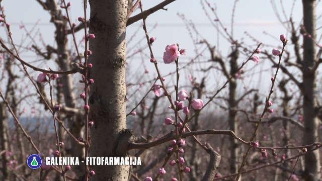 Provereni saveti stručnjaka za prolećnu zaštitu voćnjaka!