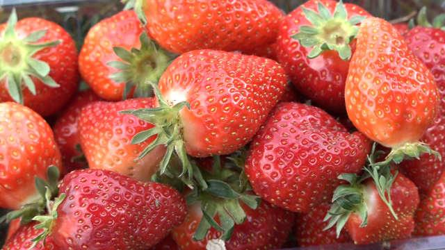Proizvodnja ranih sorti jagoda donosi prvu slatku zaradu
