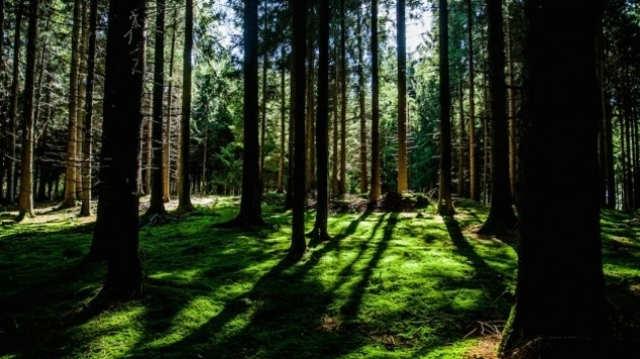 Za unapređenje šuma Srbija dobija 3,2 miliona evra