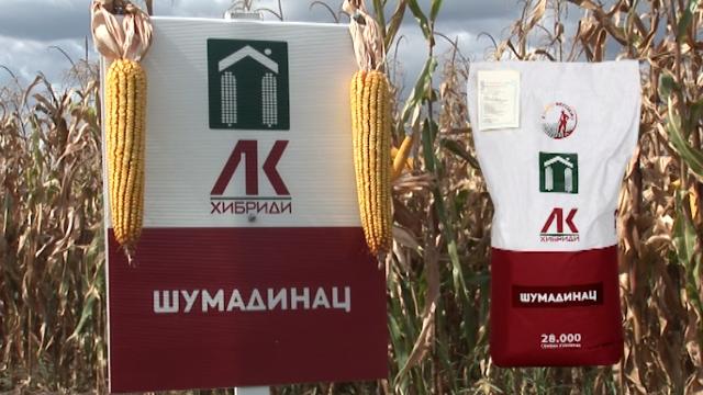 Hibridi kukuruza Šumadinac, Delija i Bećar - rodni, kvalitetni i stoci omiljeni!