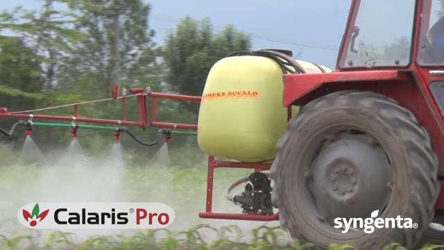 Syngenta herbicid Calaris® Pro - unapređena verzija preparata Callisto!