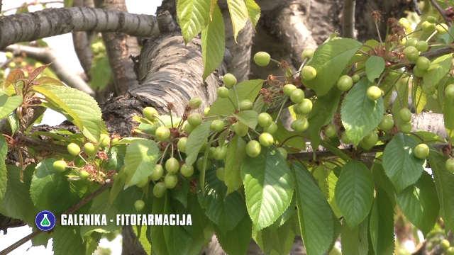 Koje kombinacije preparata stručnjaci preporučuju za zaštitu voća ovog proleća?