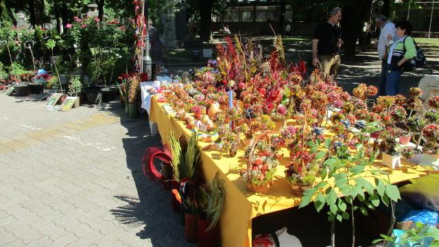 Vesti - Evo šta smo ove godine zabeležili na kikindskom sajmu cveća!