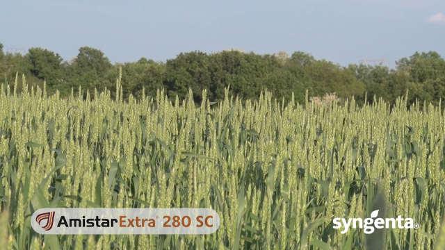 Pogledajte kakvi su efekti fungicida Amistar extra® 280 SC