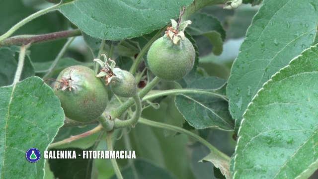 Nestabilno vreme u maju dodatni je razlog da zaštitite voćnjake!